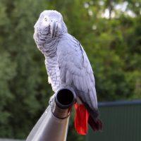 Polly Grey